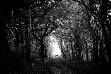 Hert in het bos van Yana Spiridonova