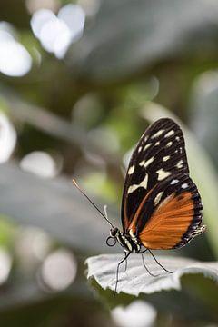 Vlinder op blad von Kristel van de Laar