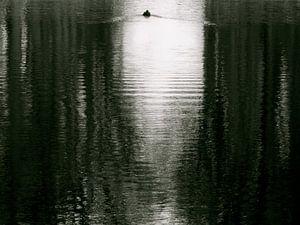 Eenzame zwemmer