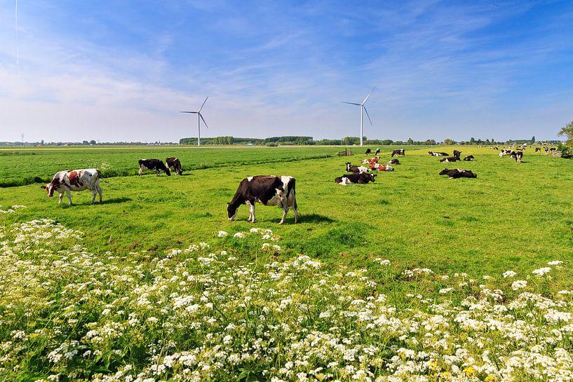 Koeien in de wei in de lente met een blauwe lucht van Dennis van de Water