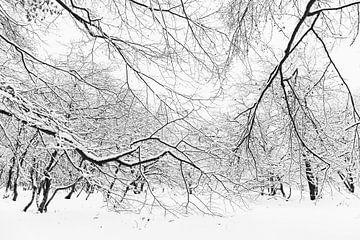 Bomen in de sneeuw van Sjaak den Breeje