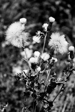 Wilde bloemen in zwart wit van Summer van Beek