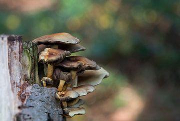 fungus  von
