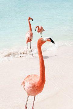 Flamingos auf dem Strand auf Aruba von Henrike Schenk