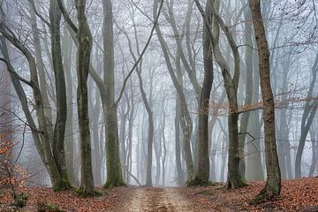 Mysteriöser Wald von Cor de Hamer