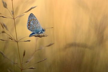Butterfly sur
