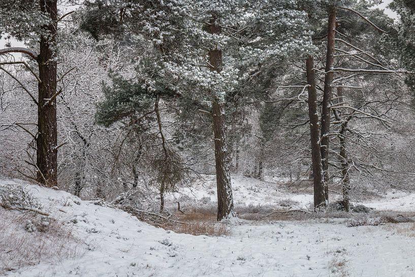White Forest van William Mevissen