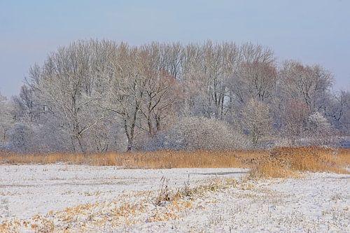 Winterlandschap met besneeuwde meersen en bos van