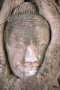 Boedda in boom van Gert-Jan Siesling