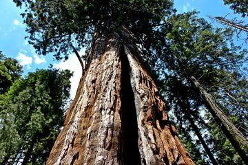 Big Tree van Johnny van der Leelie