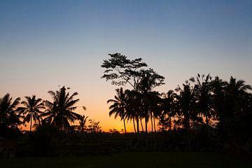 Silhouet van kokosnotenpalm in de zonsondergang van Bali van Tjeerd Kruse