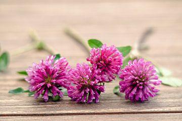 Paarse wilde bloemen op hout van Nora Verhoef