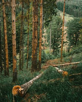 Bos van Arnold Maisner