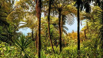 Dschungel von Heiko Westphalen
