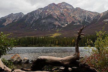 Nationalpark in Kanada, Natur, Landschaft, Rockie Mountain von Jessica Jongeneel