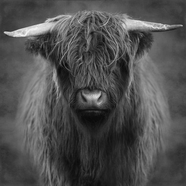 Highlander – Black& White Edition sur Marja van den Hurk