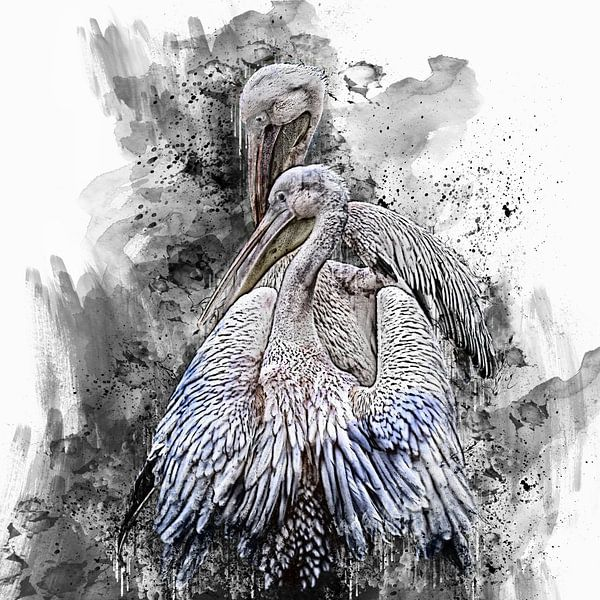 Pelikane von Harry Stok