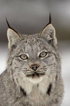 LP 71318880 Canadese Lynx van BeeldigBeeld Food & Lifestyle