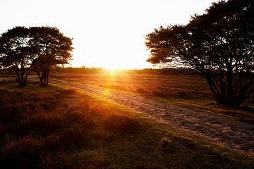 Zonsondergang op de Larense Heide