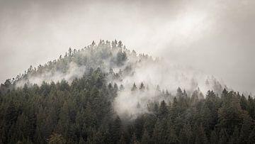 Der Nordschwarzwald von Severin Frank Fotografie