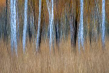 Abstract berkenbomen en herfst van Sander Grefte