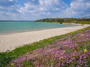 Zicht op het Partwitz meer in de lente van Animaflora PicsStock
