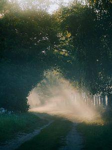 Magische bosweg van Jakub Wencek