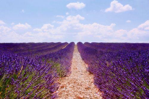 lavender field van