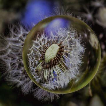 In der Glaskugel - Pusteblumenmakro von Christine Nöhmeier
