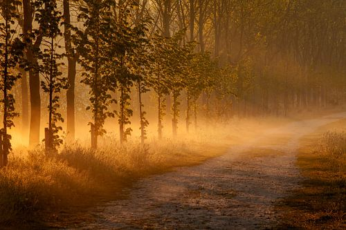 Gouden Uur bospad