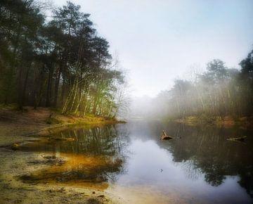 Mistige ochtend - Loonse en Drunense Duinen van Sandra |  Stoet Fotografie