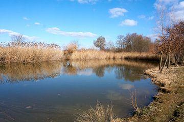 Rustig rivierlandschap met bomen en riet onder blauwe hemel van creativcontent
