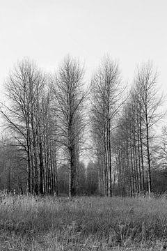 Bäume von sophiimage