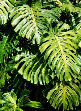 Vertikales Blättern von Bianca ter Riet