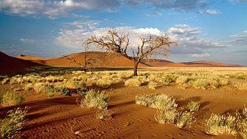 Boom bij rode zandduinen (Sosusvlei) in Namibië von Jan van Reij