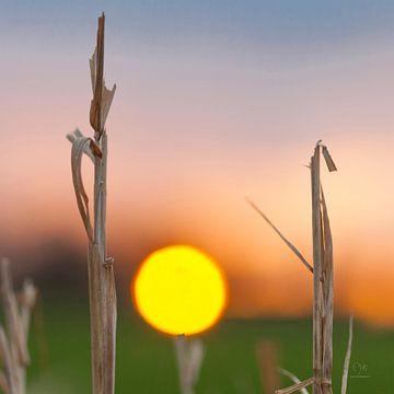 Sunrise sur