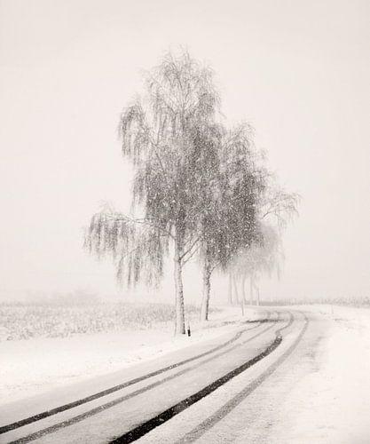 Snowy Road von Lena Weisbek
