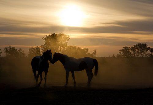 Love horses van Dennis van de Water
