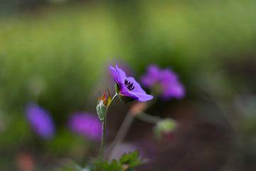 Schöne kleine Blume von Photos by Francis