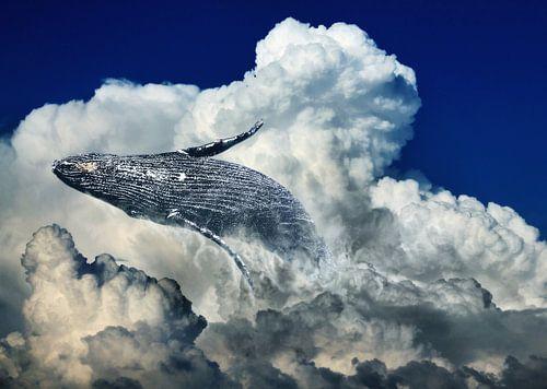 Walvis in de wolken