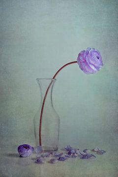 purple spring sur Claudia Moeckel