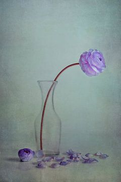 paarse lente van Claudia Moeckel
