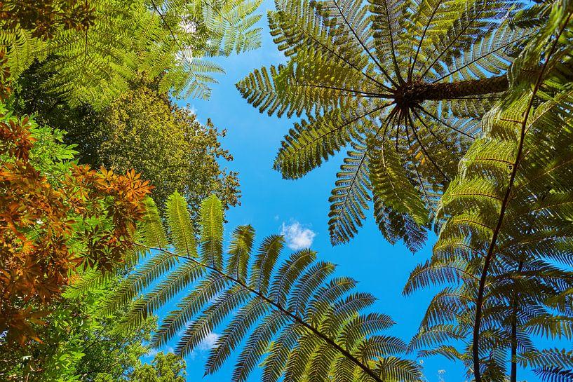 Boomvarens uit Nieuw-Zeeland van Silvio Schoisswohl