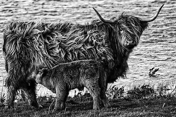Schottische Hochlandbewohner von Rik Verslype