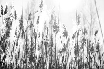 Pluimen in de wind van Sandor Ploegman-Stam