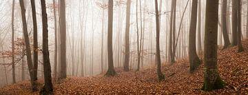 Mystérieuse forêt de conte de fées dans le panorama