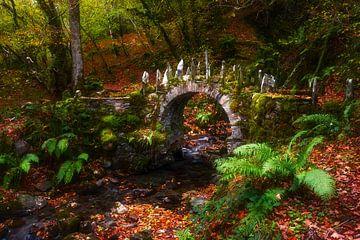 bruggetje in het bos van Daniela Beyer