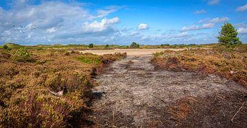 Offene Stelle in der Dünenlandschaft, Texel von Rietje Bulthuis