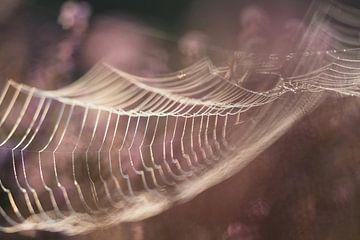 Spinnennetz in der Sonne