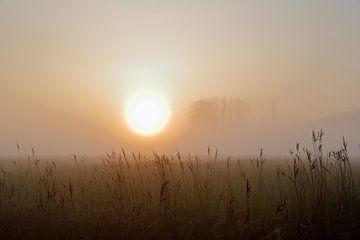 Grondmist bij zonsondergang van Rolf Pötsch
